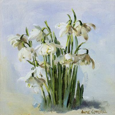 Snowdrops in Frost Christmas Card