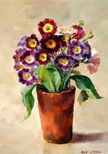 Auricula blank greetings card by Anne Cotterill
